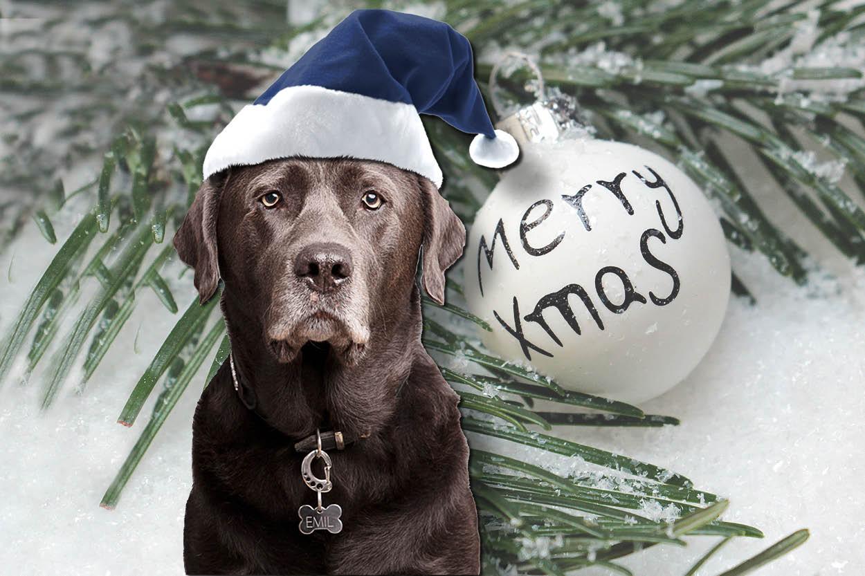 Emil frohe Weihnachten